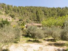 Beautiful Mountain Finca with Cherries, Almonds & Olives. Sustainable Lifestyle Opportunity!