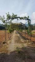 MOTIVATED SELLER – FINCA WITH TOURIST LICENCE -1.1M€ NEGOTIABLE
