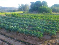 Sale of Spanish Organic Farm